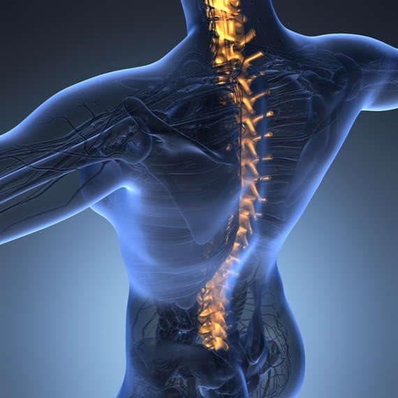 שינויים בעמוד השדרה