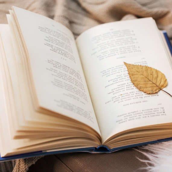 פרופ' קרסו המליץ על ספר השירה החדש 'ערמוניה'