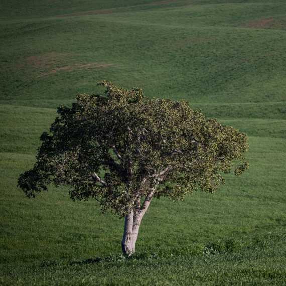 'ואלס להגנת הצומח', אילוסטרציה