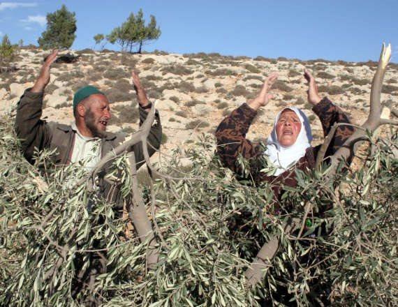 חקלאים פלסטינים - צילום ארכיון